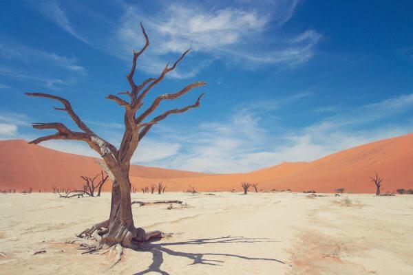 サハラ砂漠を230キロ走る!?サハラマラソンを調べてみた!のアイキャッチ
