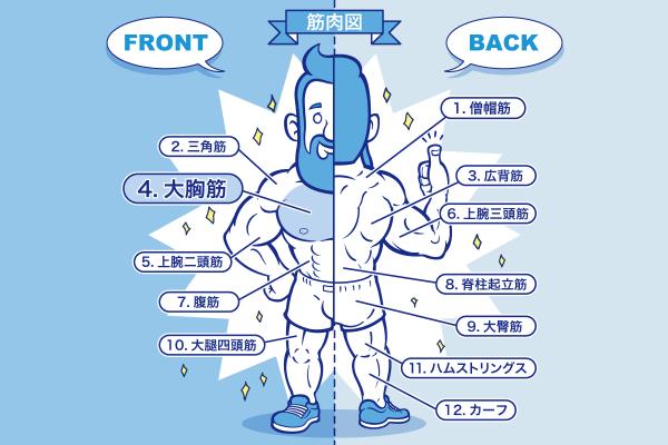[筋トレ]大胸筋の鍛え方やおすすめメニュー[完全版]のアイキャッチ