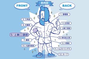[筋トレ]上腕二頭筋の鍛え方やおすすめメニュー[完全版]のアイキャッチ