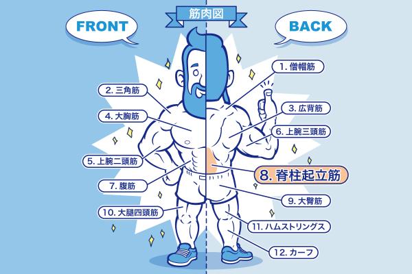 [筋トレ]脊柱起立筋の鍛え方やおすすめメニュー[完全版]のアイキャッチ
