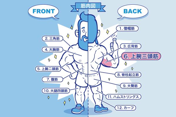 [筋トレ]上腕三頭筋の鍛え方やおすすめメニュー[完全版]のアイキャッチ