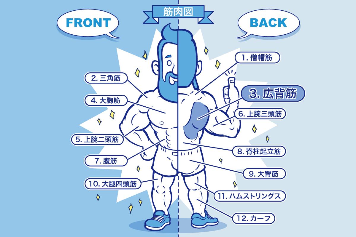 [筋トレ]広背筋の鍛え方やおすすめメニュー[完全版]のアイキャッチ