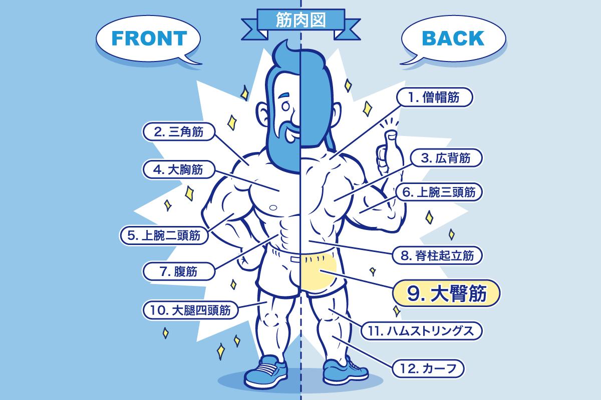 [筋トレ]大臀筋・大殿筋(尻)の鍛え方やおすすめメニュー[完全版]のアイキャッチ