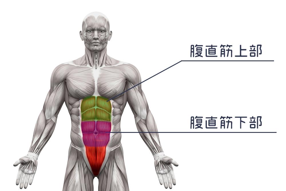 腹筋の割り方を徹底解剖①【大原則と基礎知識と疑問解決編】のアイキャッチ